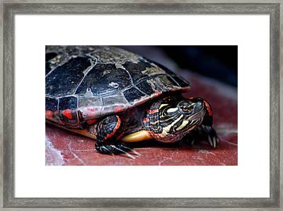 Painted Turtle Michigan Framed Print by LeeAnn McLaneGoetz McLaneGoetzStudioLLCcom