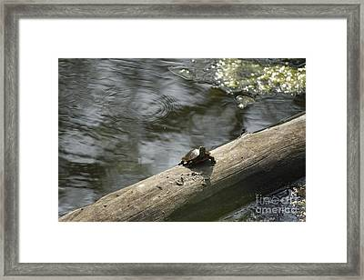 Painted Tuttle Framed Print by Yumi Johnson