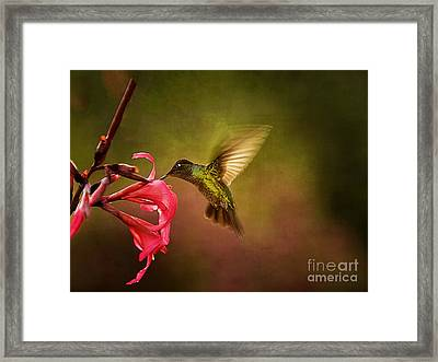 Framed Print featuring the photograph Painterly Hummingbird #1 by Anne Rodkin