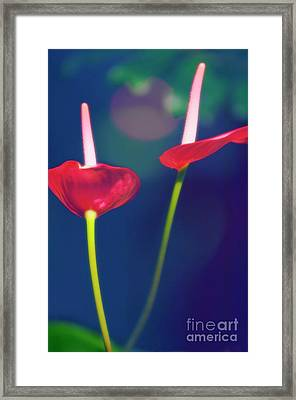 Painter's Palette (anthurium Andraeanum) Framed Print by Maria Mosolova