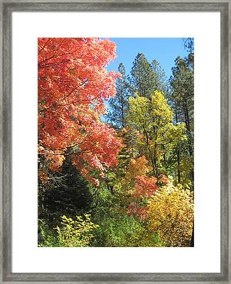 Painter's Palette Framed Print by Sandy Tracey