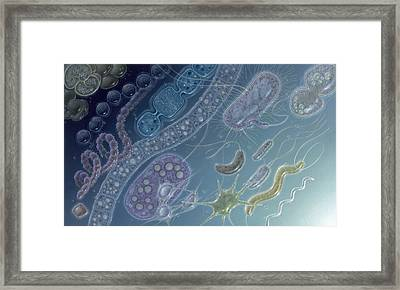 Painting Of 17 Types Of Bacteria Framed Print