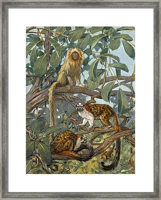 Painting Of Marmosets In The Jungle Framed Print by Elie Cheverlange