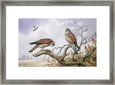 Pair Of Kestrels Framed Print by Carl Donner
