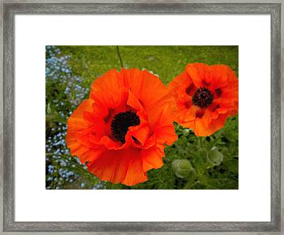 Framed Print featuring the painting Pair Of Poppies by Renate Nadi Wesley