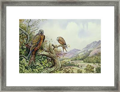 Pair Of Red Kites In An Oak Tree Framed Print by Carl Donner