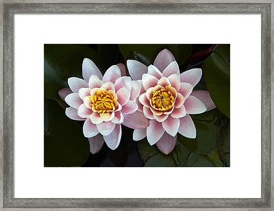 Pair Of Water Lilys Framed Print by Allan Baxter
