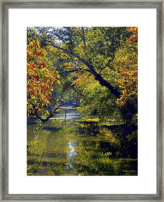 Pairie Oaks Framed Print by Mindy Newman