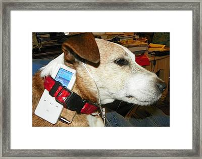 Paki Framed Print by Laurie Kidd