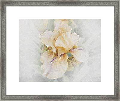 Pale Beauty Framed Print