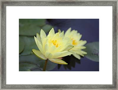 Pale Pair Framed Print by Katherine White