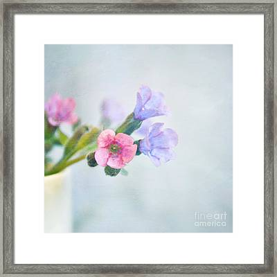 Pale Pink And Purple Pulmonaria Flowers Framed Print by Lyn Randle