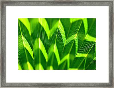 Palm Abstract Framed Print by Michael Cinnamond