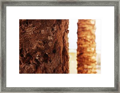 Palm And Wall 2 Framed Print