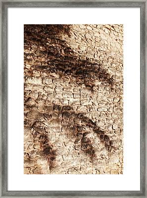 Palm Fragment Framed Print