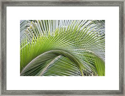 Palm Frawns Framed Print by Melanie Beasley