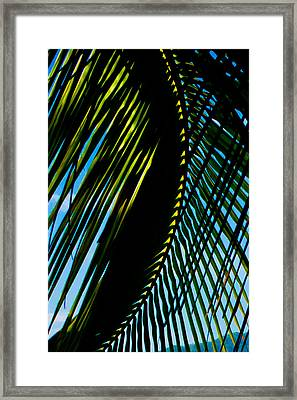 Palm Frond Curve Framed Print by Anthony Doudt