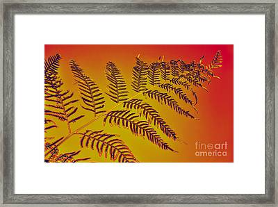 Palm Frond In The Summer Heat Framed Print by Kaye Menner