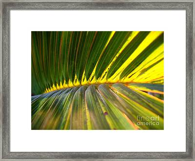 Palm Fronds Illuminated By The Sun Framed Print by Yali Shi