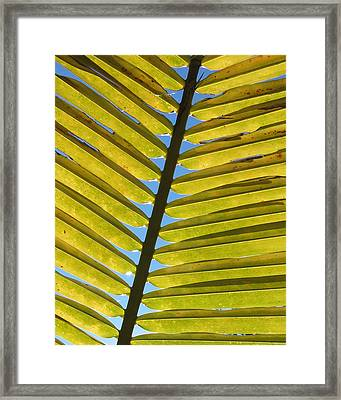 Palm Leaf Framed Print by Chris Andruskiewicz