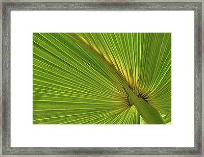 Framed Print featuring the photograph Palm Leaf II by JD Grimes