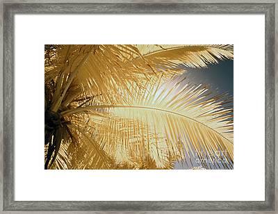 Palm Leaf Framed Print by Keith Kapple