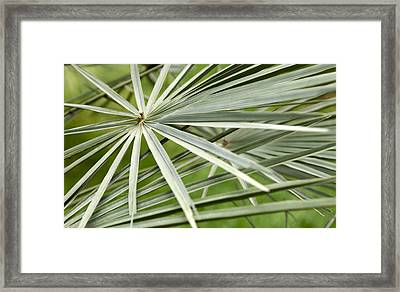 Palm Leaves Framed Print by Johnny Greig