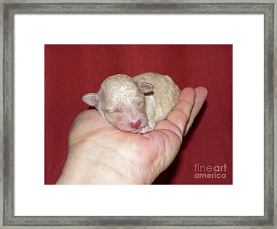 Palm Pup Framed Print