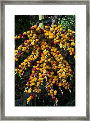 Framed Print featuring the photograph Palm Seeds Baroque by Steven Sparks