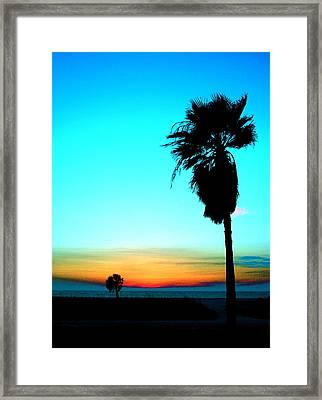 Palm Set Framed Print by Darren Cole Butcher