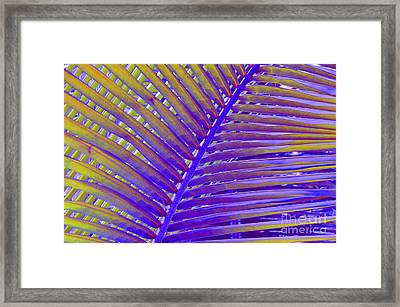 Palm Tree Abstract Framed Print by Cindy Lee Longhini