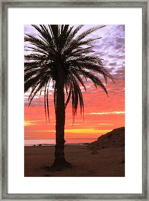 Palm Tree And Dawn Sky Framed Print