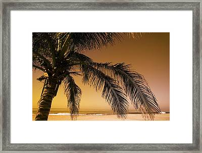 Palm Tree And Sunset In Mexico Framed Print