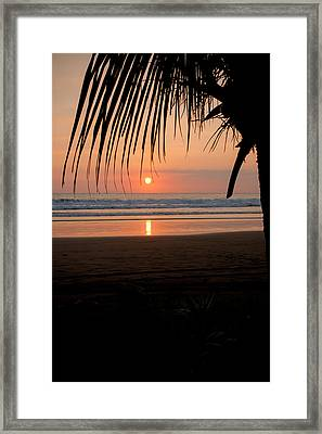 Palm Tree At Sunset Framed Print by Anthony Doudt