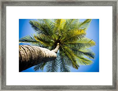 Palm Tree From Below Framed Print by Anthony Doudt