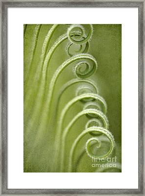 Palm Tree Fronds Framed Print by Neil Overy