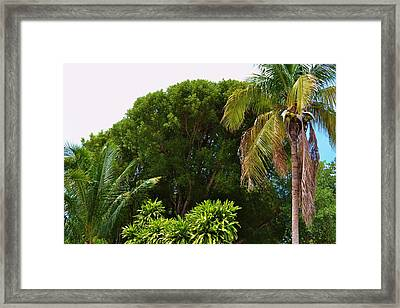 palm tree Key west Framed Print by Josee Dube