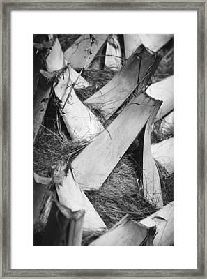Palm Tree Macro Framed Print by Adam Romanowicz