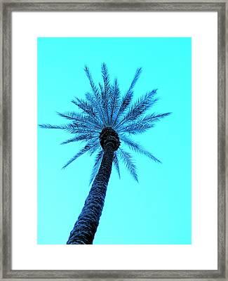 Palm Tree  Framed Print