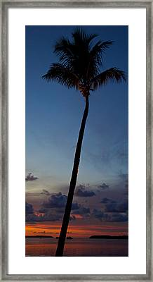 Palm Tree Sunset Framed Print by Mike Horvath