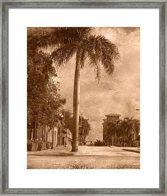 Palm Tree Framed Print by Trish Tritz
