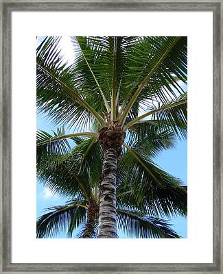 Palm Tree Umbrella Framed Print by Athena Mckinzie