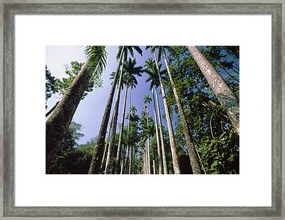Palm Trees Against The Sky Framed Print by George Oze