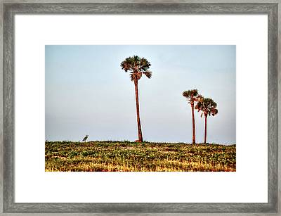 Palm Trees And Heron Framed Print by Michael Thomas