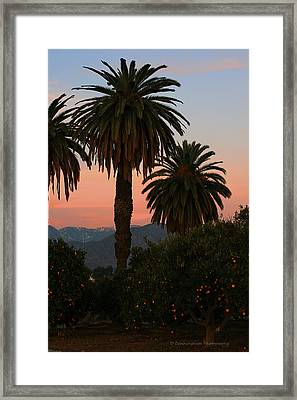 Palm Trees And Orange Trees Framed Print by Dorothy Cunningham
