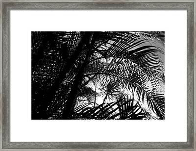 Palm Trees Framed Print by Colleen Cannon
