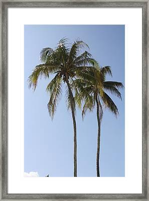Palm Trees In Love Framed Print by Natalija Wortman