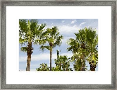 Palm Trees In Spain Framed Print by Perry Van Munster
