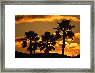 Palm Trees In Sunrise Framed Print by Susanne Van Hulst