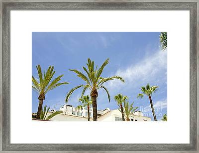 Palm Trees In The Blue Framed Print by Perry Van Munster